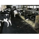 Kraiburg collaborates on Best Practice in Dairy Colleges