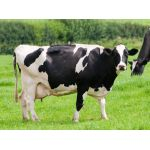 Get your FREE guide to the control of lameness in dairy cows