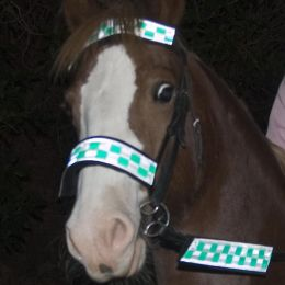 Hi Vis Brow/Nose/Rein Reflective Bands Green Chequer
