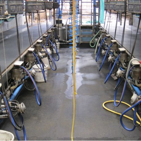 Parlour Floors for Dairy Housing