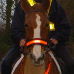 Hi Vis Brow/Nose/Rein Reflective Bands Red